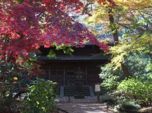 旧東慶寺仏殿と紅葉
