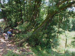 昨日の森林整備作業