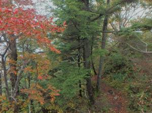 戸隠山の紅葉