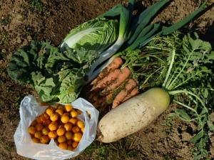 野菜たちとキンカンの実