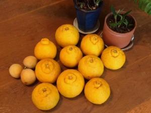 デコポンとレモン
