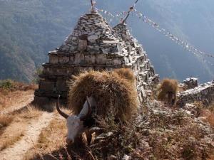 マニ塚と藁を運ぶ牛