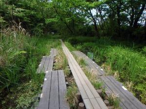 ヘイケボタルの池
