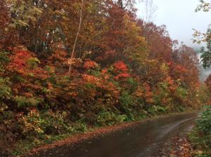 奥志賀林道の紅葉