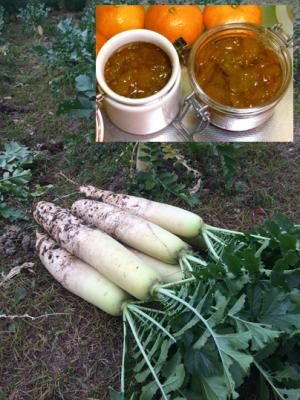 ダイコンの収穫とキンカンジャム